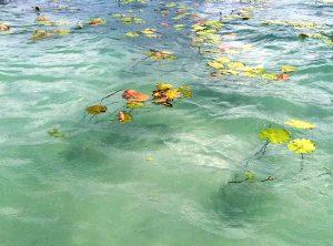 presnaya laguna v mexice