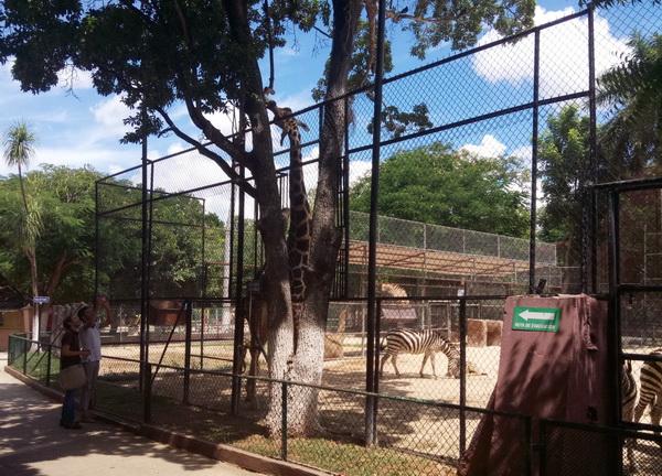 zoopark v meride