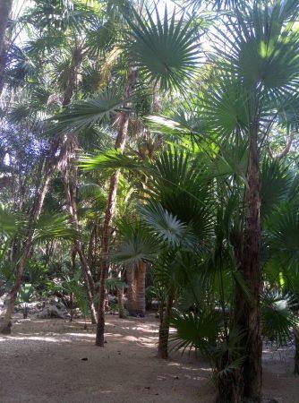 Недорогой сенот в Канкуне (3)