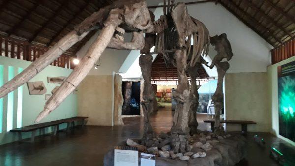 Музей на территории Калакмуль. Скелет мамонта.