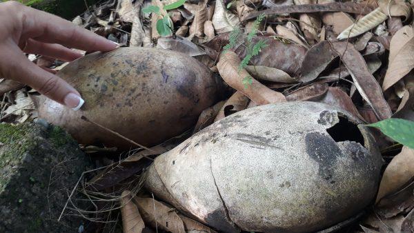 Таинственные районы Мексики. Яйца динозавров.