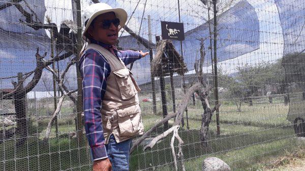 Зоопарки в Мексики и содержание животных. Фауна страны в опасности.
