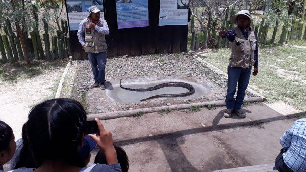 Змеи в Мексики как представители фауны страны.