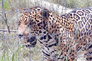 Фауна Мексики в зоопарках страны.