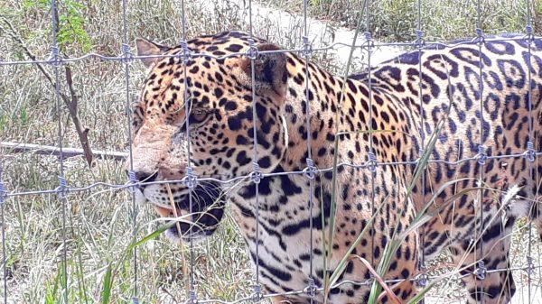 Фауна Мексики в зоопарке города Оахака.