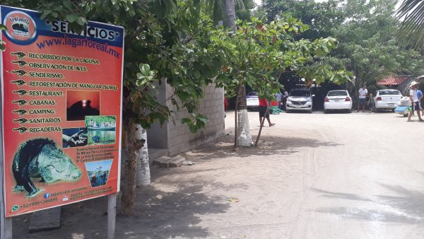 Где увидеть крокодилов в Мексике. Штат Оахака в районе пляжа Масунте.
