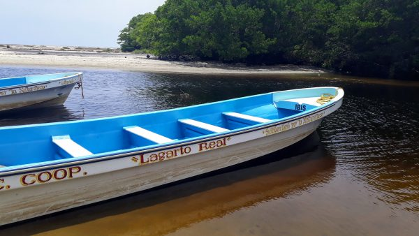 Прогулка на лодке к крокодилам в Мексике. Опасные маршруты в Оахаке.