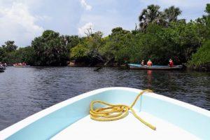 Крокодилы в Мексике в мангровых зарослях лагун.