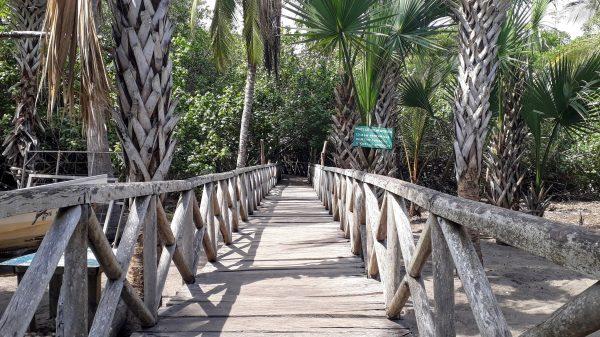 Дорога к лагуне с крокодилами в Мексике. Подходить к краю воды не безопасно для жизни.