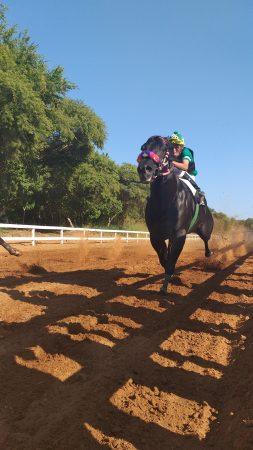 Скачки на лошадях. Проведение соревнований в Пуэрто Эскондидо.