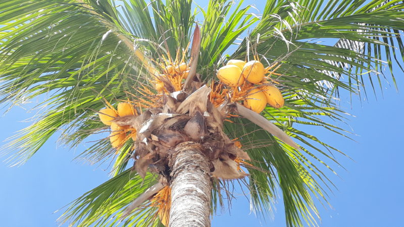 Тень от кокосовых пальм.