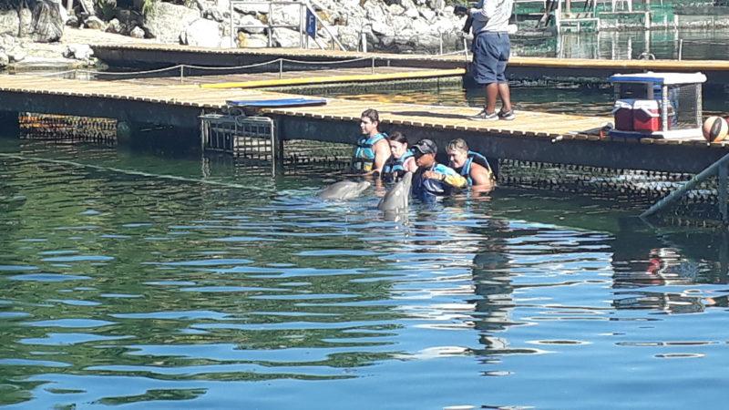 Бесплатно посмотреть на дельфинов в Пуэрто Авентурас в Мексике.