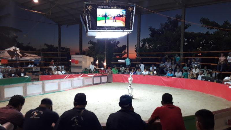 Петушиные бои в Мексике