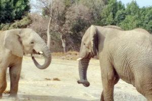 Зоопарк Пуэбла, Мексика. Слоны.