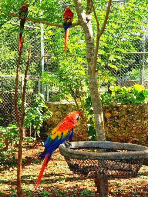 Эко тур из Канкуна в Рио Лагартос.