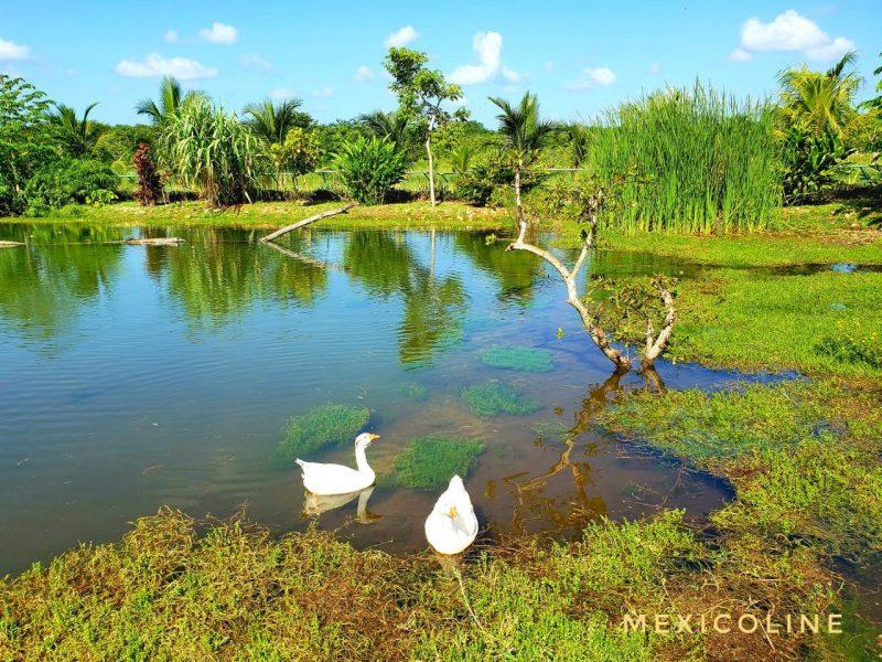 Экскурсия из Канкуна в заповедник Рио Лагартос.
