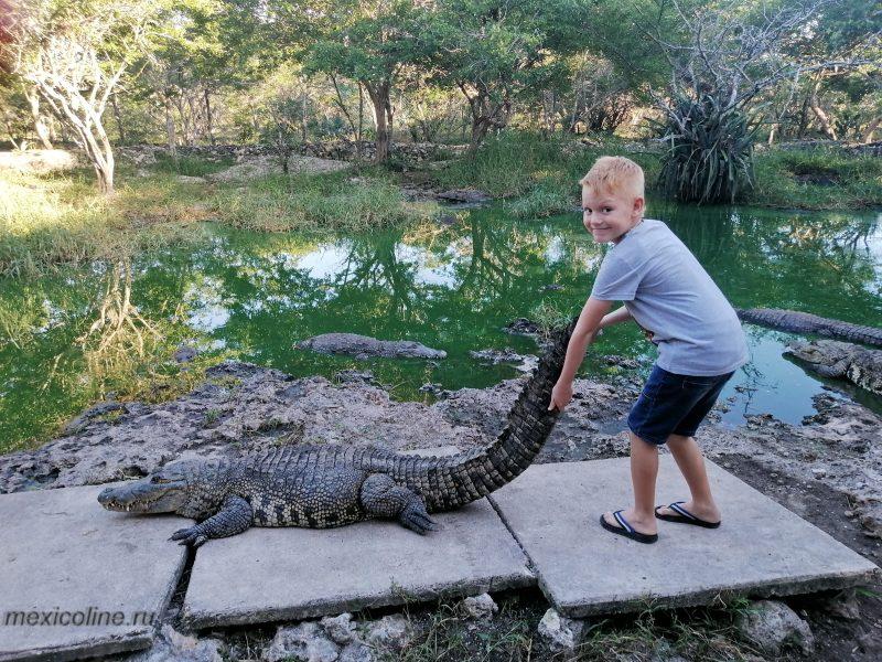 Крокодиловая ферма в Мексике. Ривьера Майя.